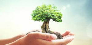 environnement 300x147 - Formation ISO 14001 au Maroc